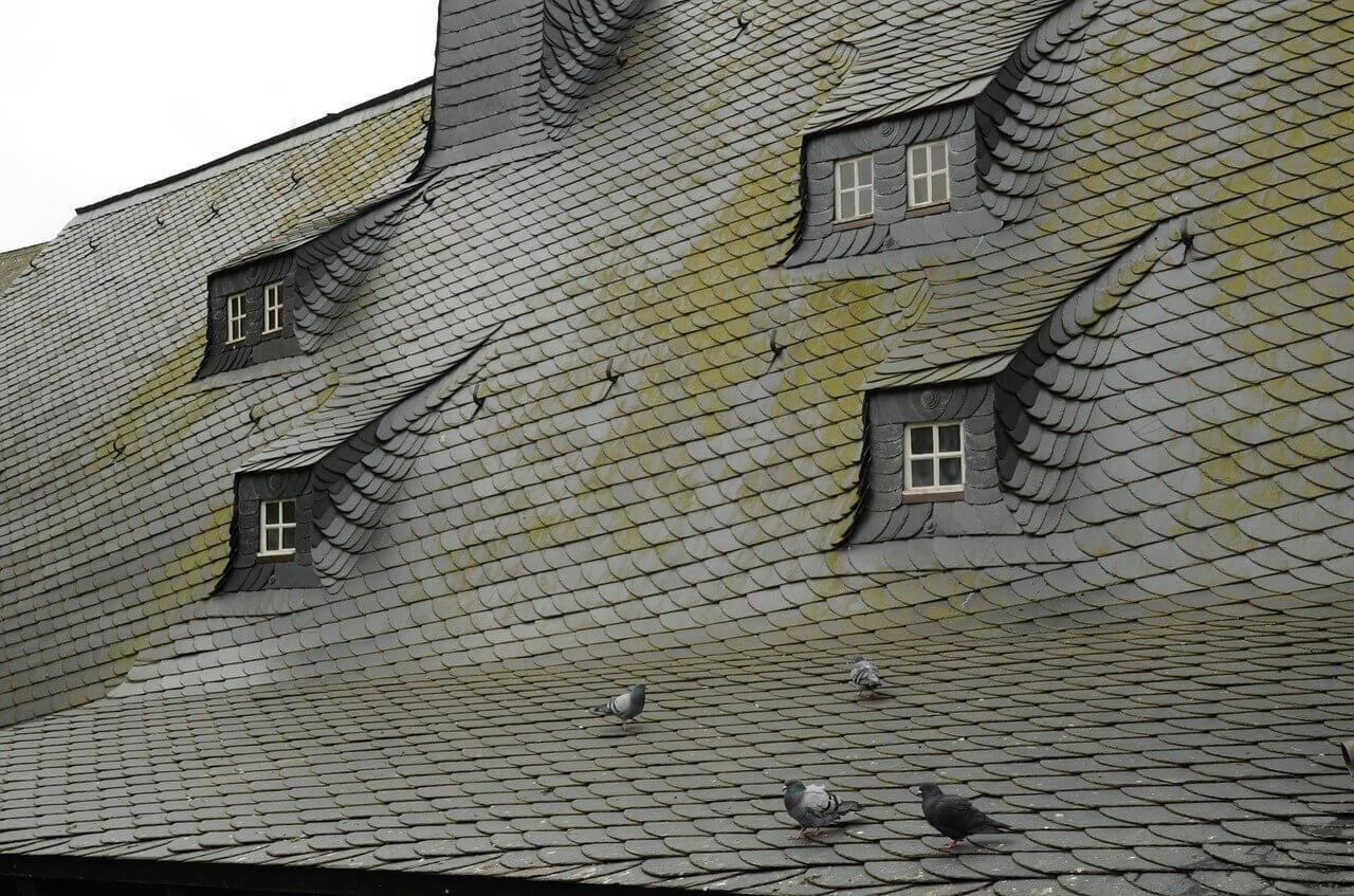 nettoyant de toiture anti mousse